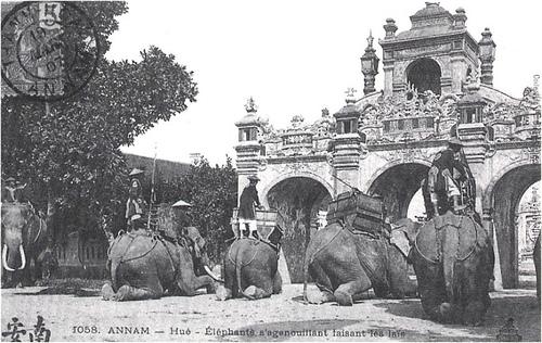 Quân đội nhà Nguyễn tượng binh