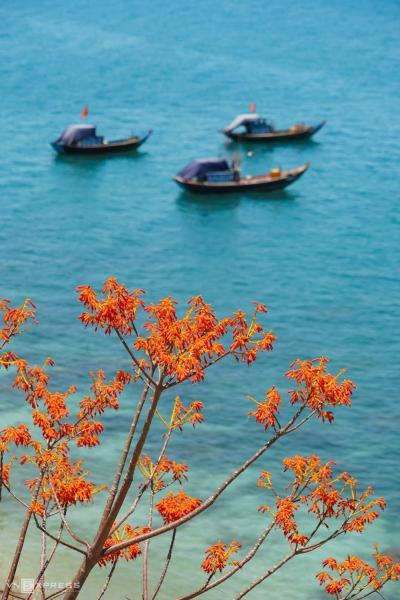 Hoa ngô đồng nở rộ và đẹp nhất trong tháng 7 - 8, quanh con đường bê tông uốn lượn qua các khu vực bãi Làng, bãi Xếp, bãi Bìm và bãi Hương. Đất trên đảo khô, tầng mỏng nên cây phát triển cao khoảng 5 - 10 m. Cây ngô đồng trên Cù Lao Chàm thuộc họ Trôm, gọi là ngô đồng đỏ để phân biệt với cây ngô đồng tại Huế có hoa màu tím hồng.