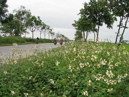 hoa miên man bất tận cả một vùng quê xao xuyến lòng người qua đường.