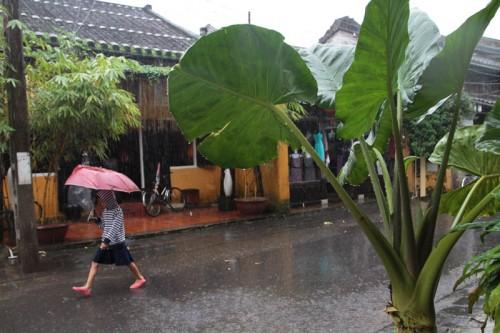 Mưa tưới mát những cây cối trên phố cổ.